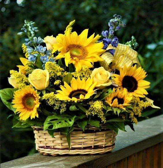 собаки картинки полевые цветы и подсолнухи этому времени
