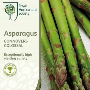 Kuskonmaz Tohumu Asparagus 7 90 Tl