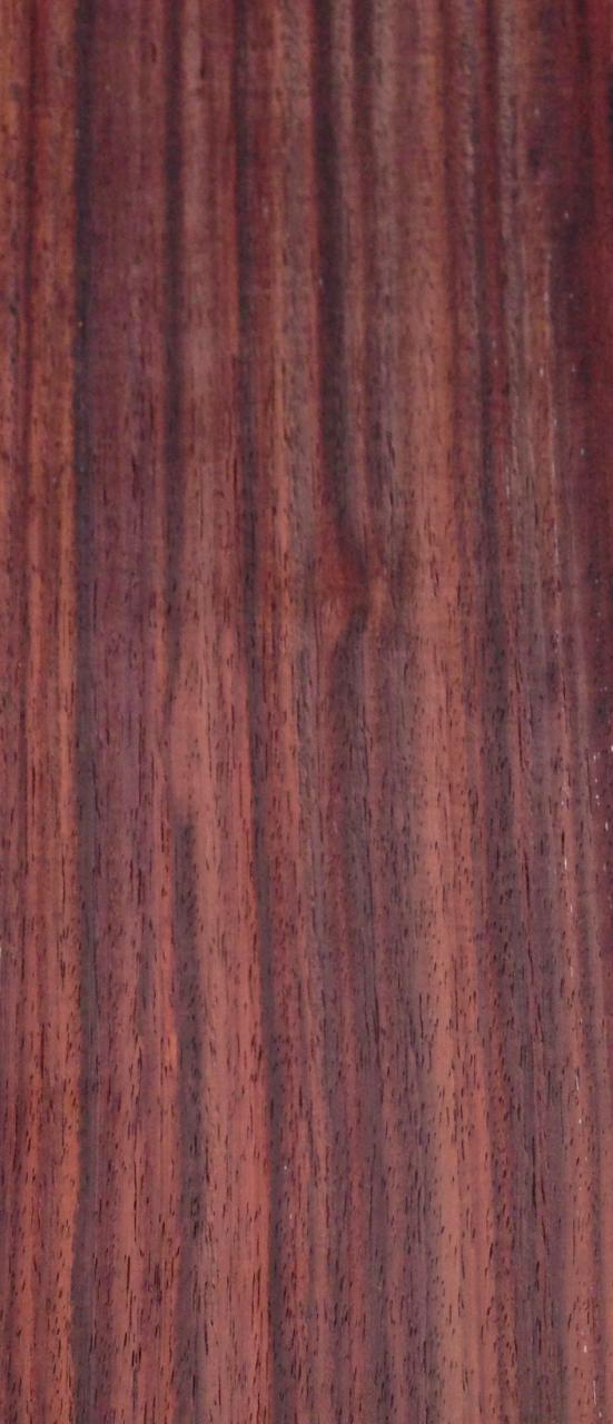 Hindistan Pelesenki Ağacı 14cmx48cmx3mm